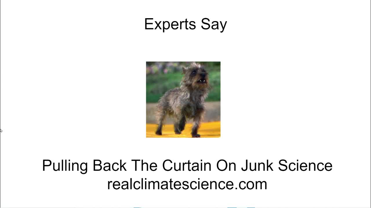 Experts Say
